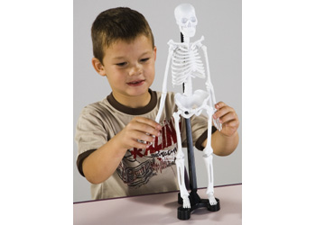 Mini Skeleton Edu Toys 46cm Human Model Anatomy New Box Ebay